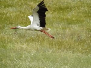 צפייה בציפורים נודדות טיול ג׳יפים פלגי בזלת