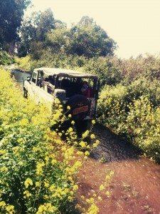 טיולי מים לימות האביב והקיץ החמימים מתאימים למשפחות בג'יפים של פלגי בזלת