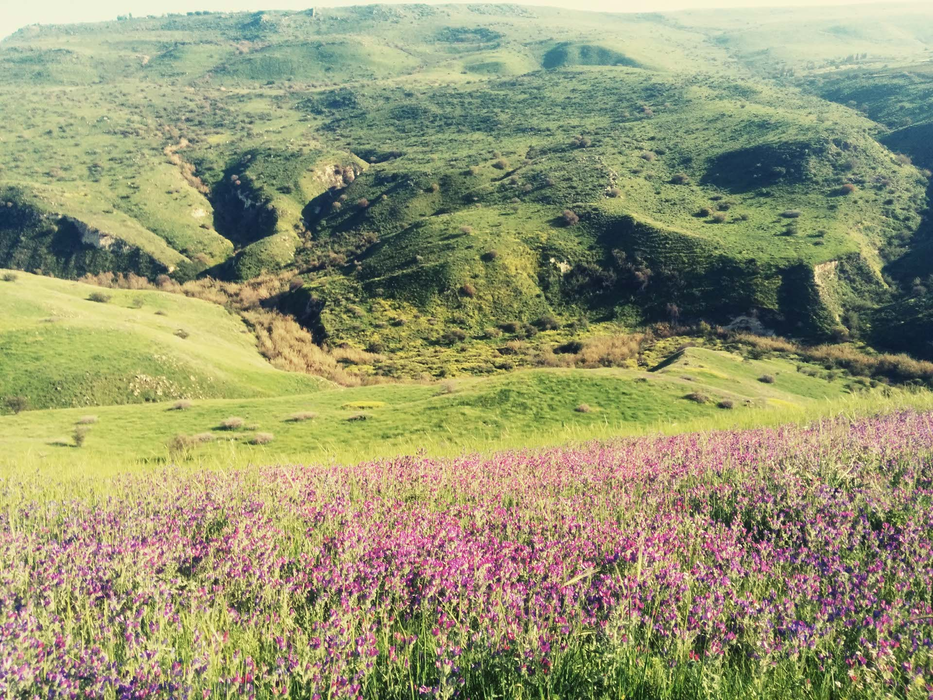 טיולי פריחה בפסגות הגולן בעונת החורף והאביב בג'יפים של פלגי בזלת