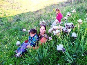 פריחת האירוסים המרהיבה מעניינת ילדים ומבוגרים כאחד בטיולי הג'יפים של פלגי בזלת