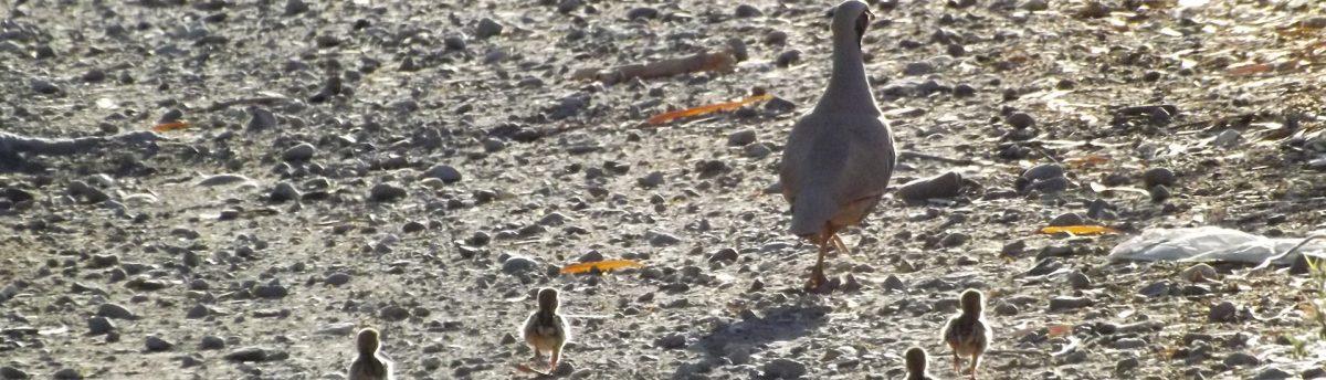 בטיול ג'יפים של פלגי בזלת נדע למצוא את חיות הבר ולצפות בהם