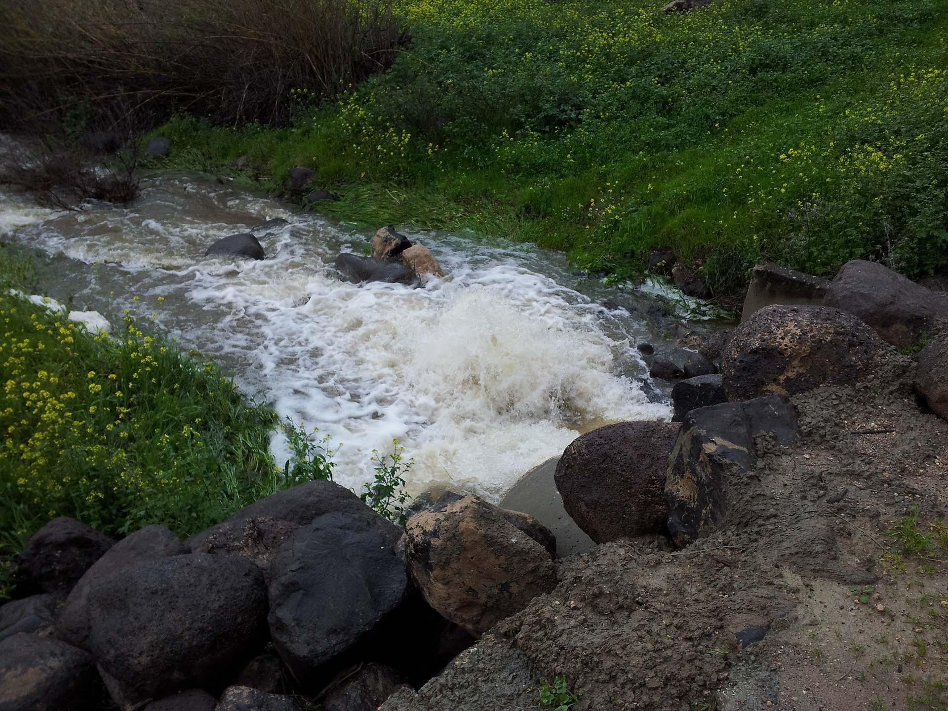 מים גועשים אחרי הגשמים בטיולי המשפחות של פלגי בזלת